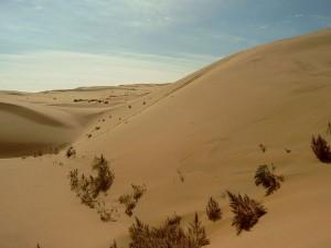 Chiny: Najcięższa susza od 60 lat
