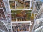 Słonie na pocztówce
